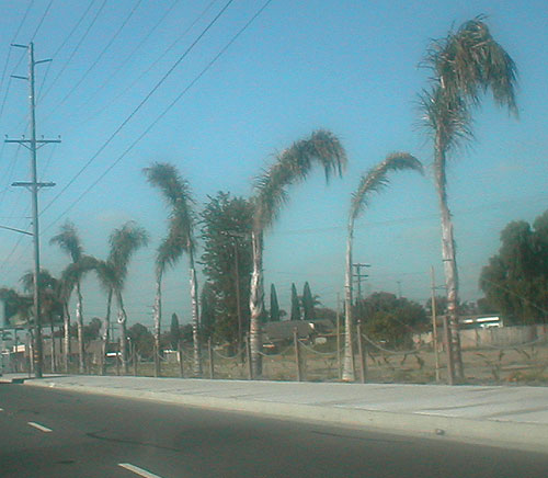 city of stanton palms on beach blvd